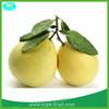 2014 new Chinese fresh grapefruit honey pomelo for selling