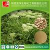 Manufacturer sales angelica sinensis (oliv.) diels