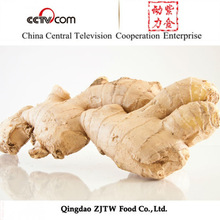 2014 Shandong Varieties of Ginger