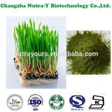 Instant energy drink powder organic barley grass powder, barley grass juice powder