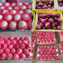 fresh huaniu apple factory
