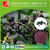Manufacturer sales acai berry extract powder