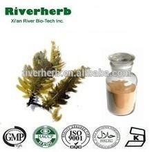 Natural Brown Algae Extract 40% Fucoxanthin