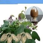 100% natural ginseng extract Ginsenosides 4% 10% 20% 40% 80% siberian ginseng extract