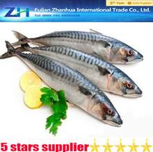 frozen food!Frozen Pacific mackerel for sale!frozen seafood