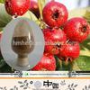 free sample maslinic acid //HACCP Kosher FDA hawthorn extract //high quality 95% maslinic acid