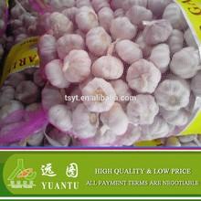 2014 Cold Storage Fresh Red Garlic , New Price!!!
