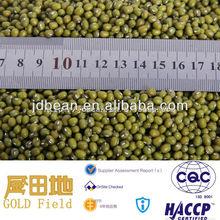 2014 new crop sprouting Green mung bean