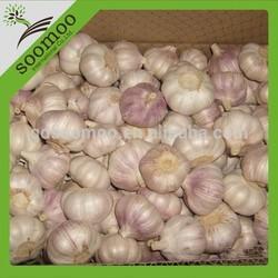 china fresh red garlic price