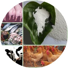 Farm vitamin E 50% Powder,China Manufacturers and Exporters,Vitamin E 50% Gmp
