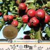 Professional manufacturer major Maslinic Acid natural organic Hawthorn Fruit P.E.
