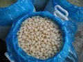 Nova safra de alho salgado- alho em conserva em salmoura( 450- 550 pcs/kg)