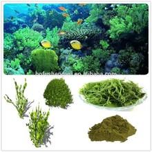 seaweed extract/organic seaweed extract/pure seaweed extract