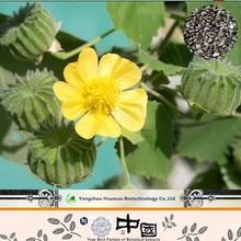 China Supply Chingma Abutilon Seed P.E./Cluster Mallow Fruit Extract/Malva Seed Extract