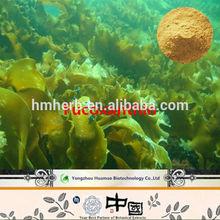 100% natural Distribute plant extract Factory Pure Natural Kelp Extract / Fucoidan powder and free sample
