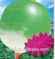 chino semillas de hortalizas de alta calidad híbrido semillas de rábano