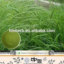 providing Herbal Extract powder barley grass powder with free sample