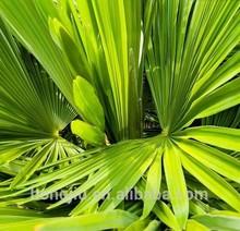 Wholesale Pure Saw Palmetto