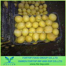 Fresh Lemon on Hot Sale