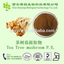 High quality Organic Tea Tree Mushroom Extract Agrocybe Chaxingu Extract
