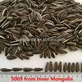 Graines de tournesol de haute qualité de nouvelle récolte (en vente à chaud)