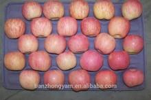 Fresh Apples Fuji Apple