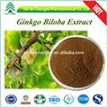 Gmp fábrica HPLC / UV 100% natural ginkgo biloba extrato de folha de pó
