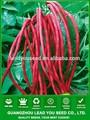 nbe10 weichi sementes de feijão vermelho nome da fábrica de sementes