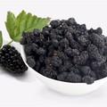 Sang shen frutas extracto de tamarindo polvo de semilla de importadores