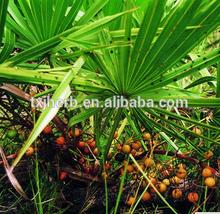 saw palmetto herb extract powder 20 1