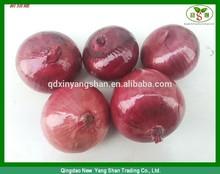 2014 peeled fresh onion exporter