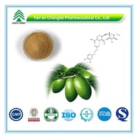 GMP Certificate Popular Herbal Olive Leaf Extract