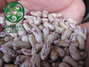New Crop Light Speckled Kidney Bean,Good Price,High Quality