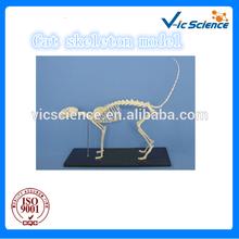 Cat skeleton model skeleton teaching model
