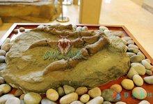 China Simulation Dinosaur Fossil Craft