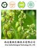 Tartary Buckwheat Extract