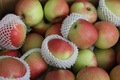 fresh maçãs royal gala