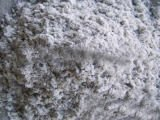 No chrysotile fiber