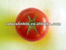 Tomato Extract Lycopene