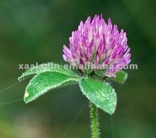 Purity GMP Manufacture Supply Red Clover Extract (isoflavones 2.5% 8% 20% HPLC)