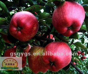 import fruit apple, Huaniu