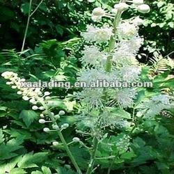 Cimicifuga racemosa Extract,Triterpene Glycosides,Triterpenoid saponins