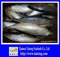 buena calidad toda la ronda de pescado congelado bonito