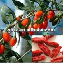 goji from qinghai