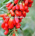 bulk goji berry
