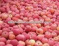 frescas manzanas fuji manzana dulce de manzana orgánica