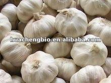High Quality Garlic Extract Power 0.5%-2% Allicin (HPLC)