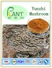 Yunzhi meshroom extract; 10%,20%,40%Polysaccharides