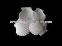white scallop shells