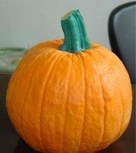 Halloween hot promotional gifts PU foam pumpkin
